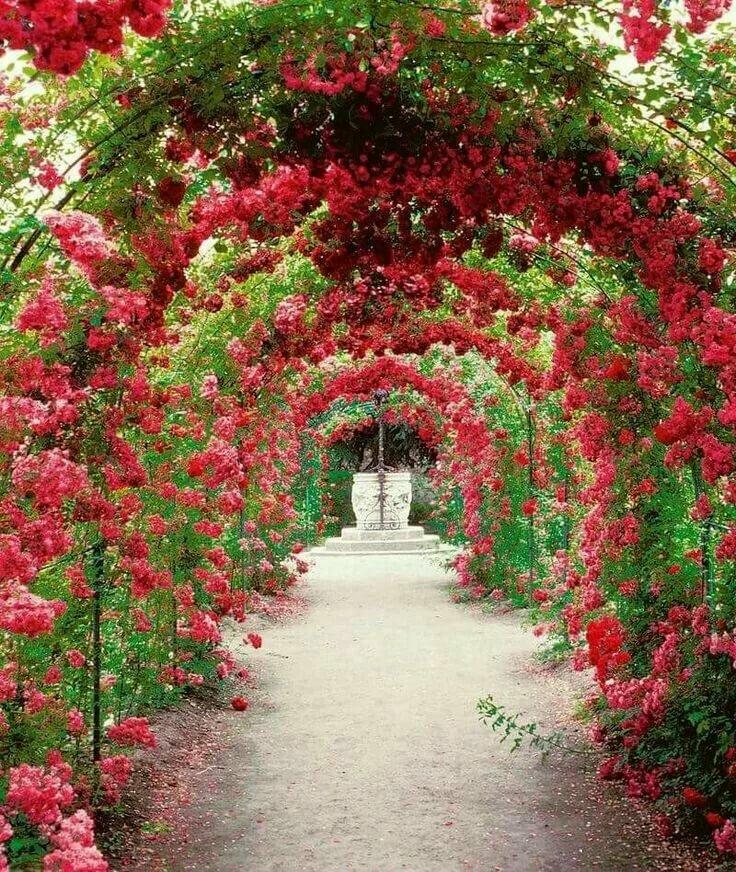 новых фотообои сад из красных роз этом декоративные