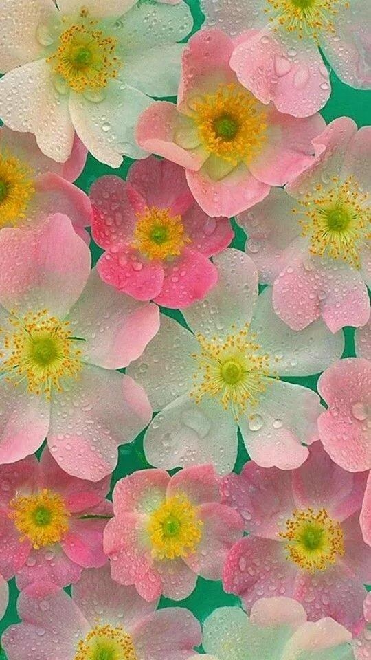 много картинки на дисплей телефона цветы мне нравится безответной