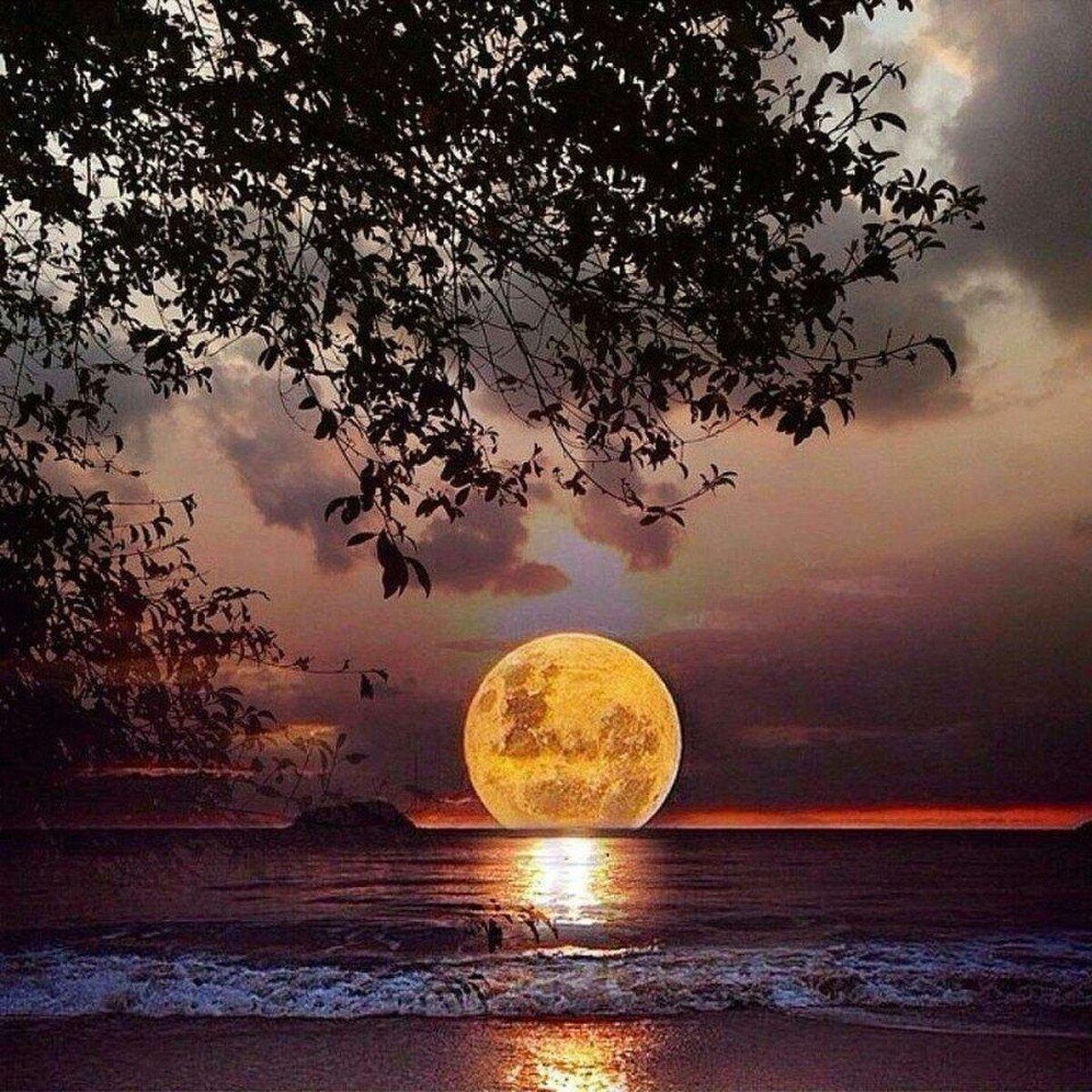лунная соната красивые картинки