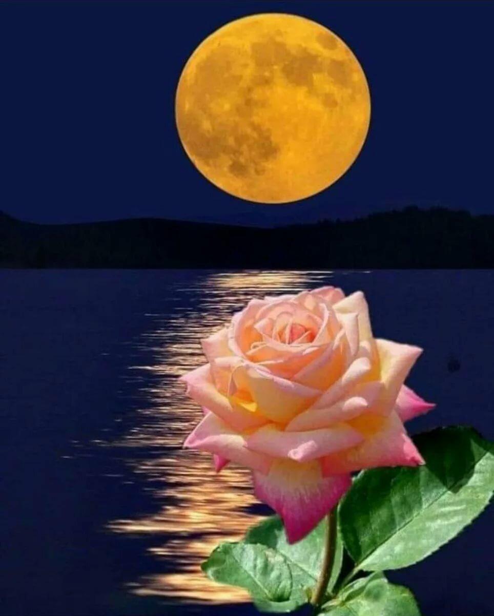 Открытки спокойной ночи с цветами розы