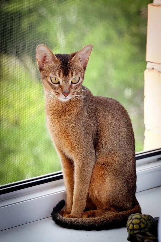 Грациозные картинки кошки