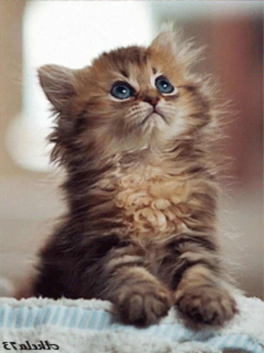 Котенок гифы, открытки найти