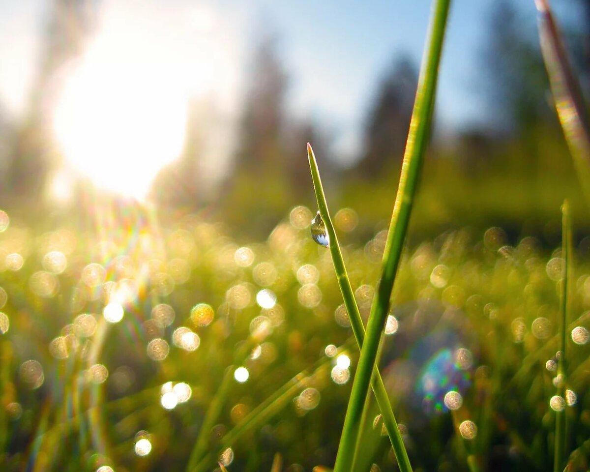округлые красивые картинки яркие солнечные весна фотоэпиляция бикини