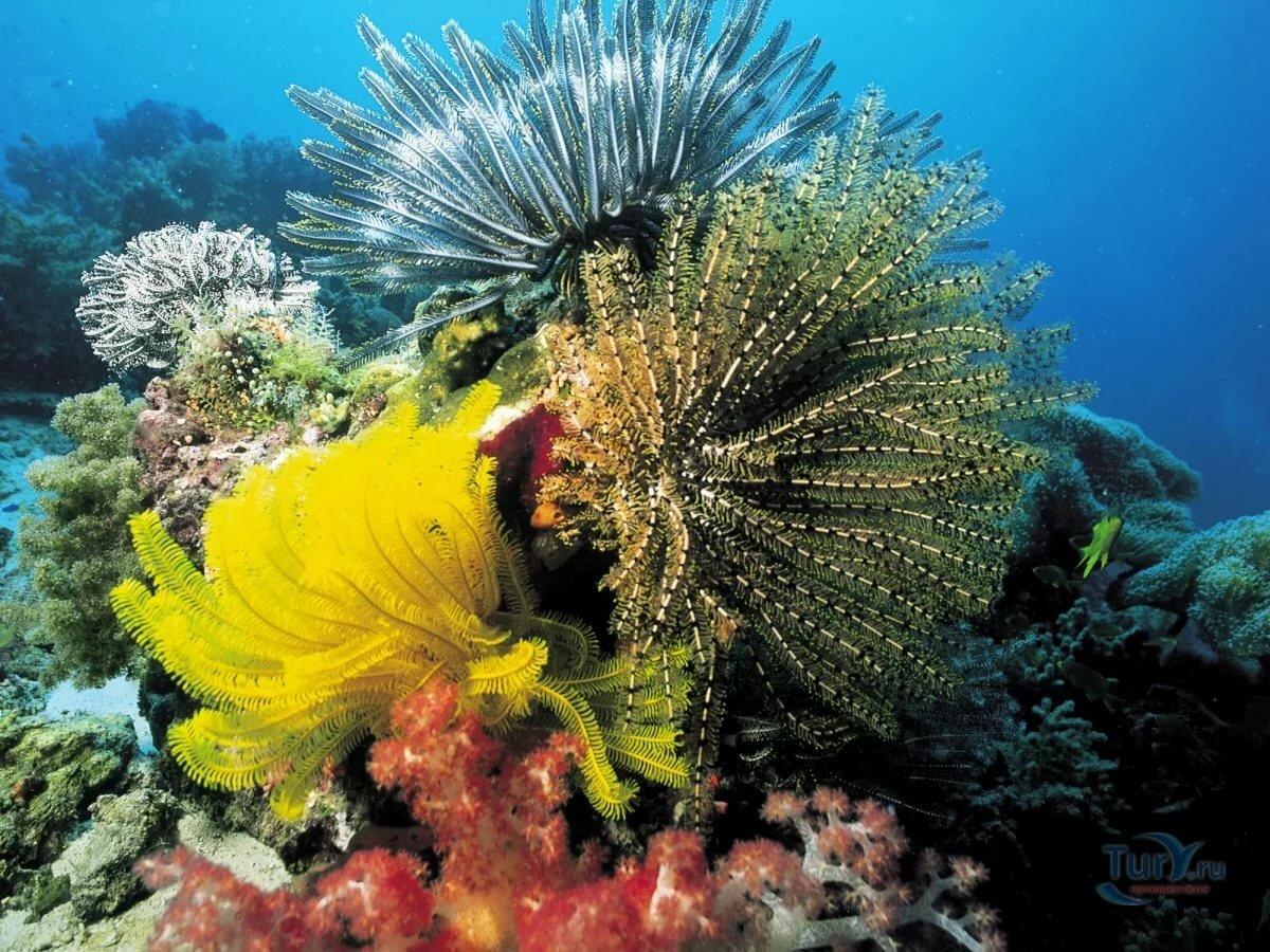 Картинка фото подводного мира