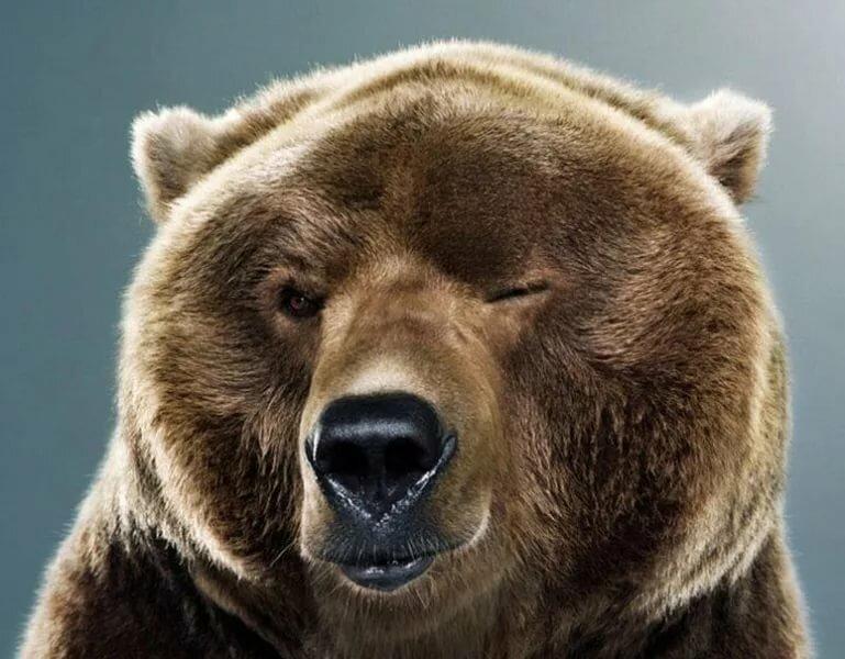 Часовым, прикольные картинки медведь россия