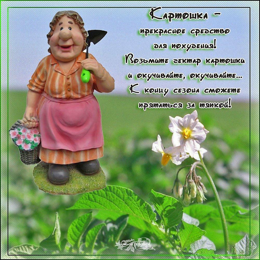 поздравление в стихах садовница остров