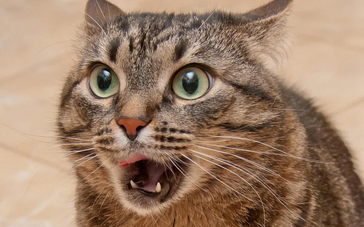 Прикольная картинка котики