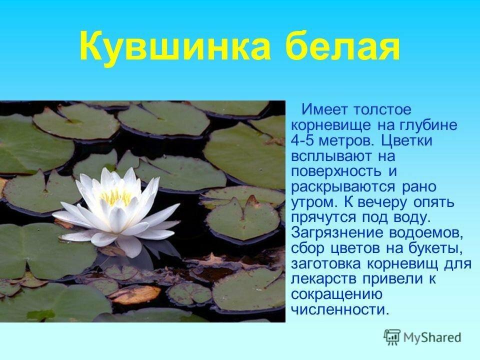 Фото красной книги с растениями