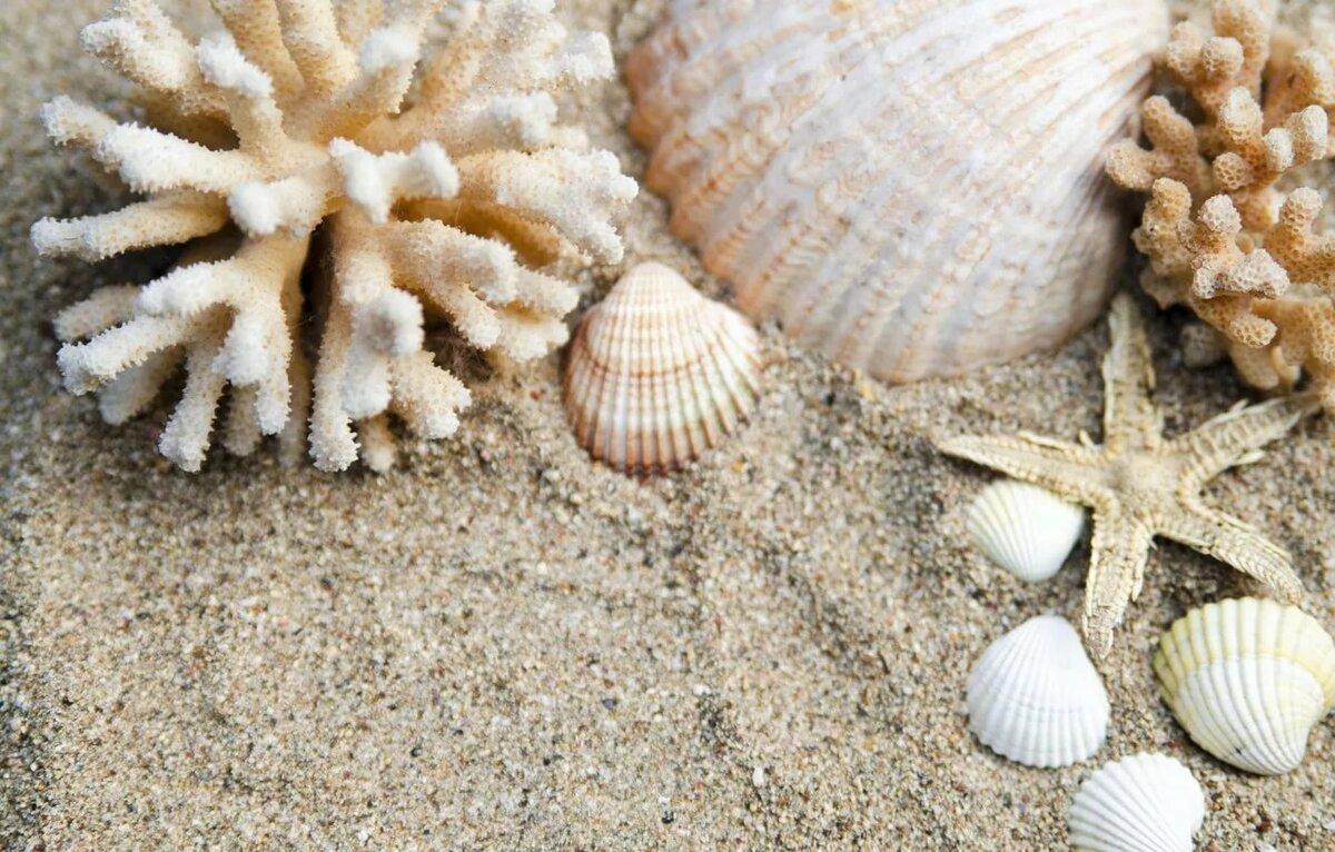 Ракушки на песке картинки
