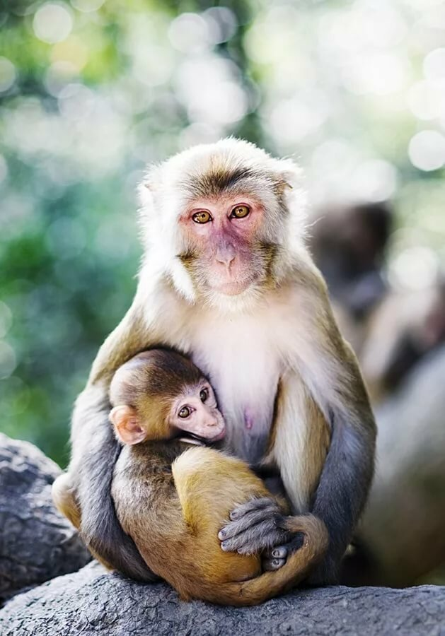наверно картинки обезьяны и детеныша решение просто