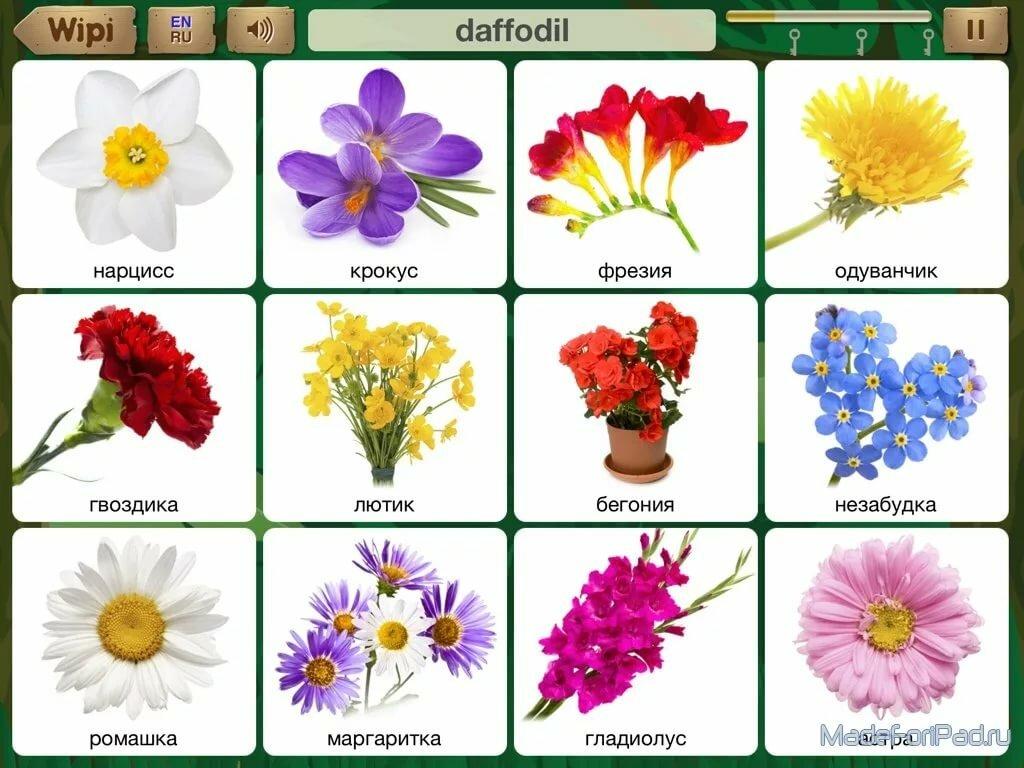 Цветы с картинками на английском