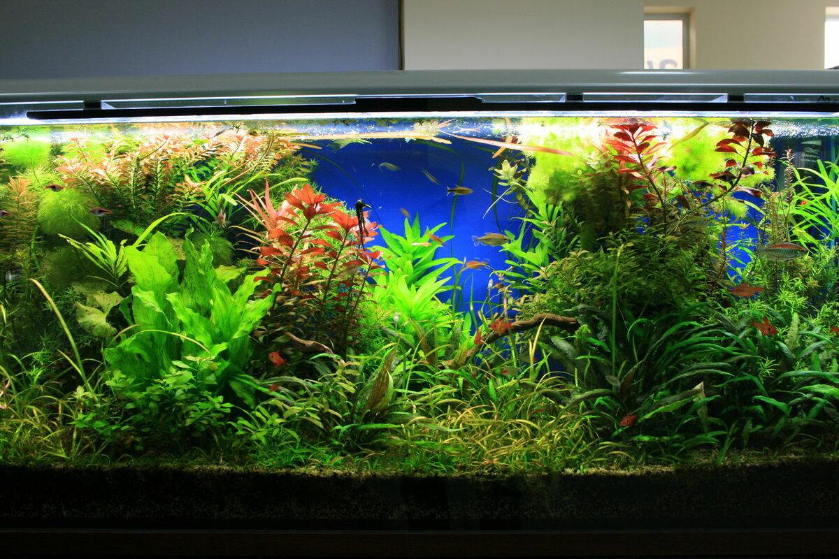 работе аня фото оформления аквариумов с живыми растениями продаже