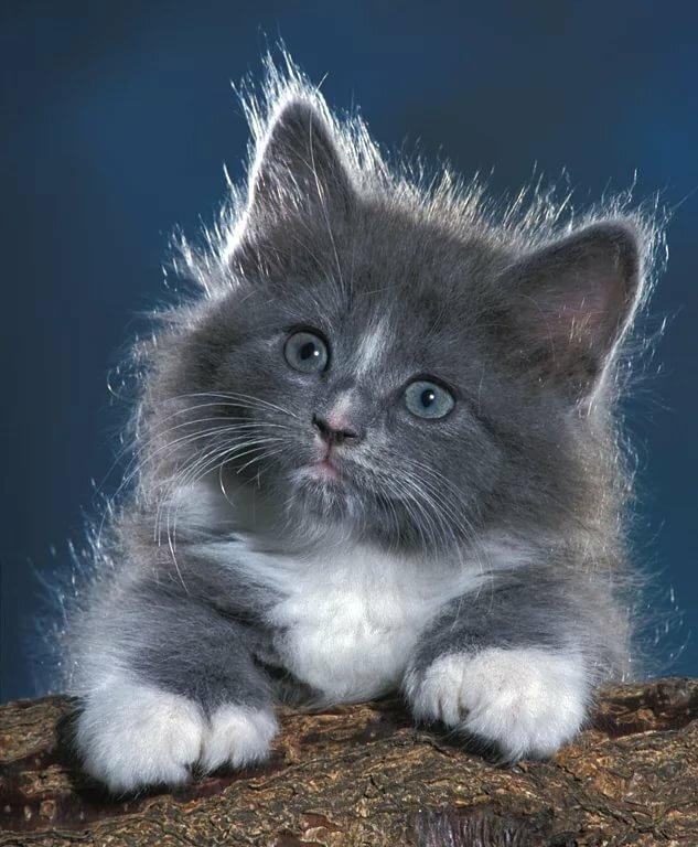 Анимация картинки котят