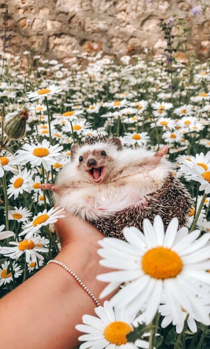 Добрые веселые картинки для настроения