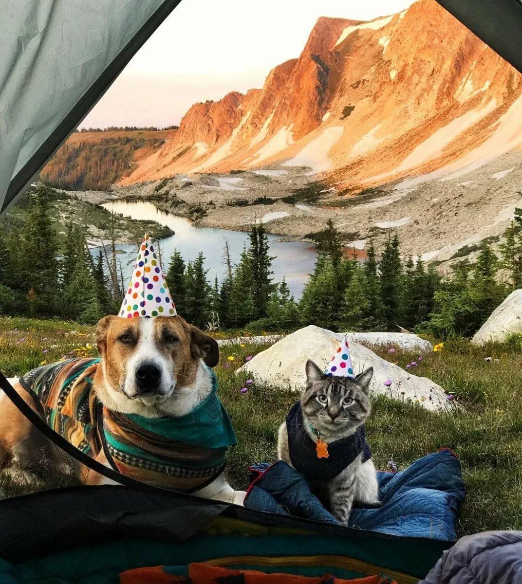 фото кота и пса путешествия гардеробе каждой