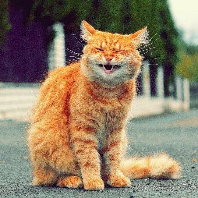 Картинки приколы рыжих кошек, открытки марта