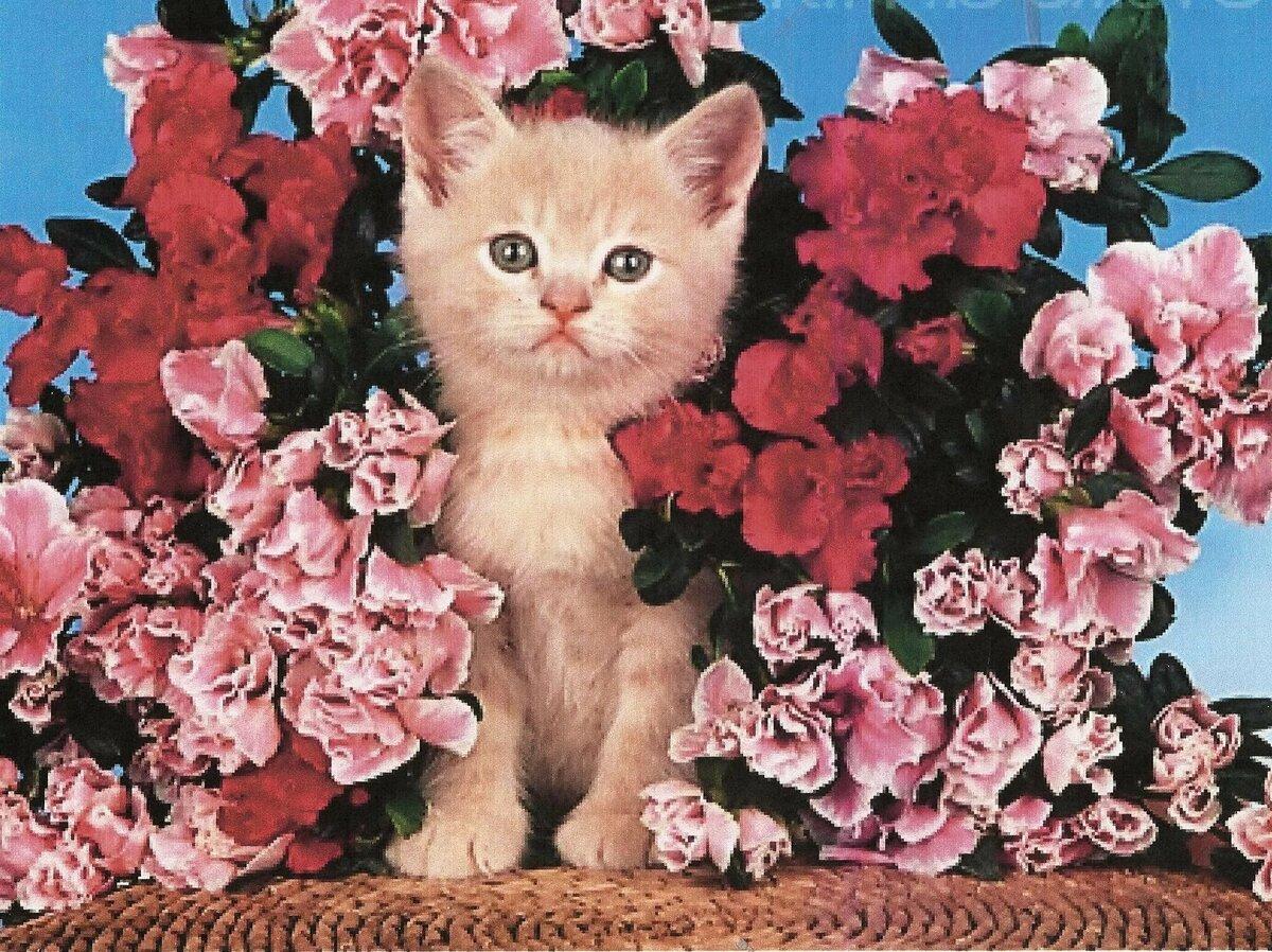 Открытки с цветами и котятами красивые