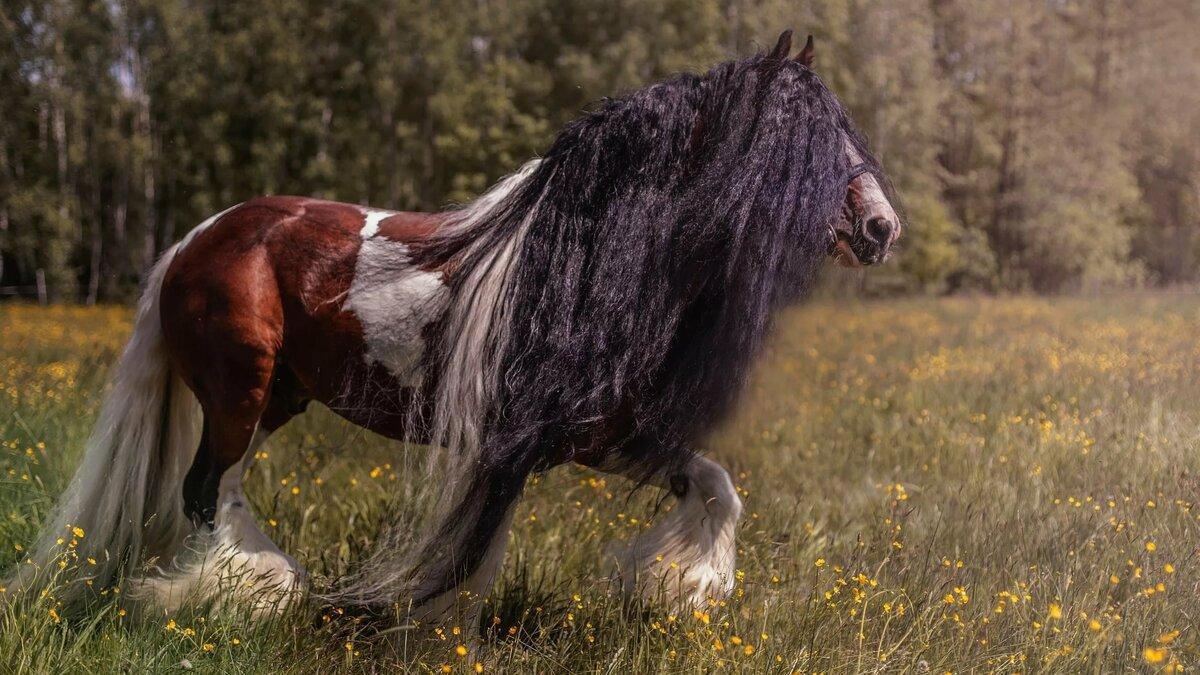 картинки и фотографии коней