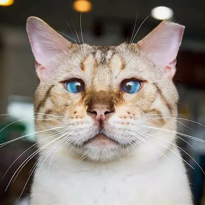 Очень прикольные картинки котов