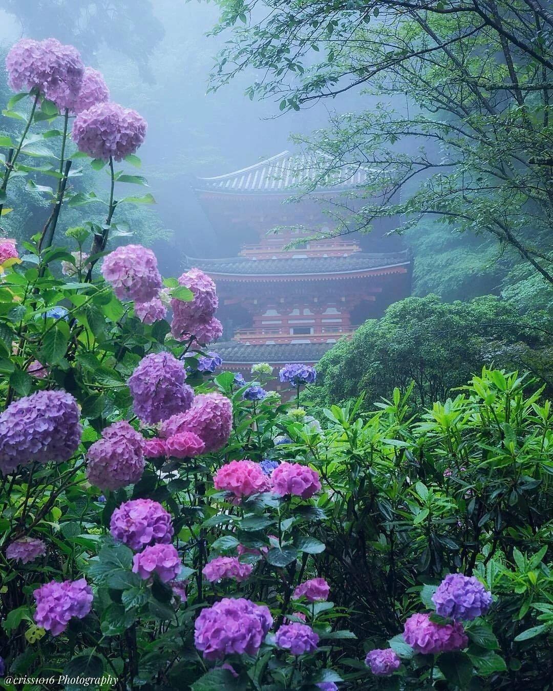 Фото рая цветы природа они