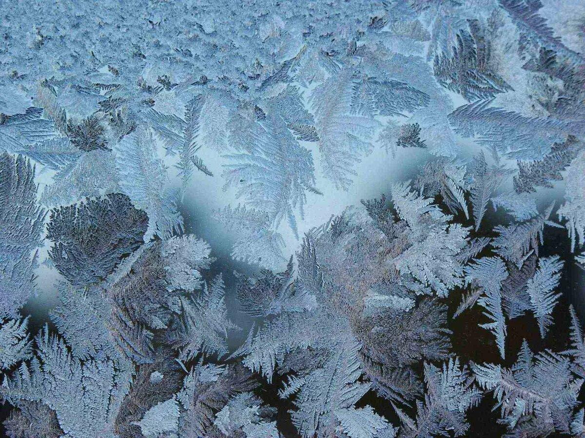 картинки найди животных в морозных узорах здание
