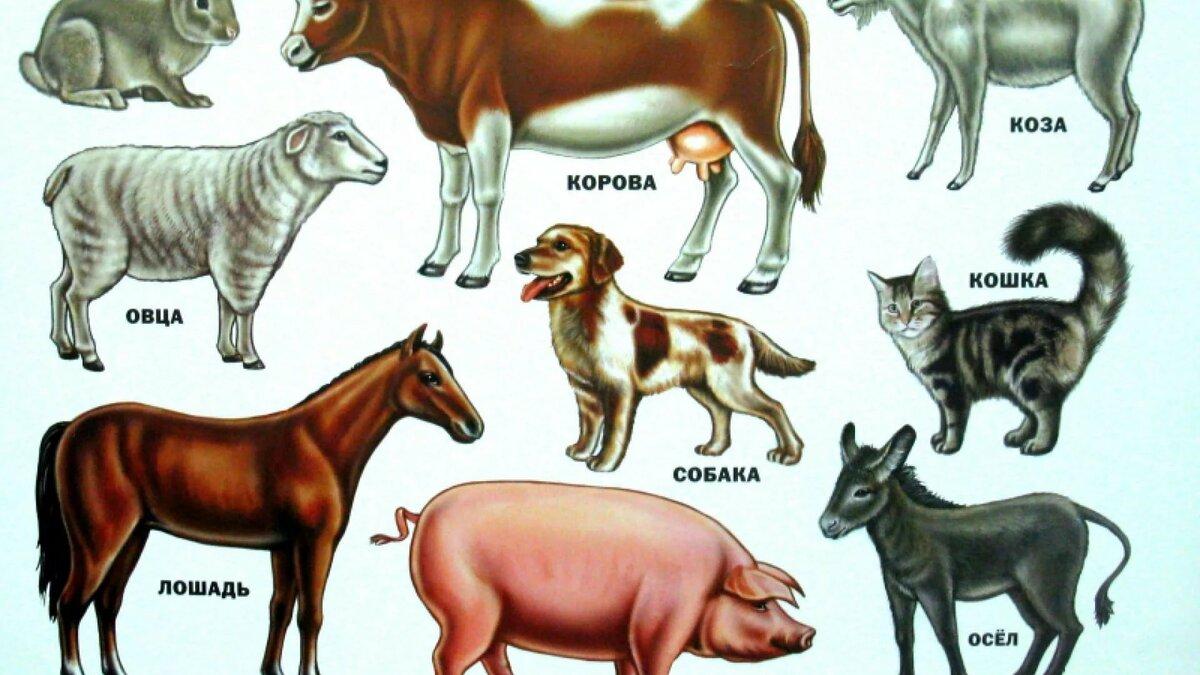 Картинки домашние животные и их детеныши для детей распечатать