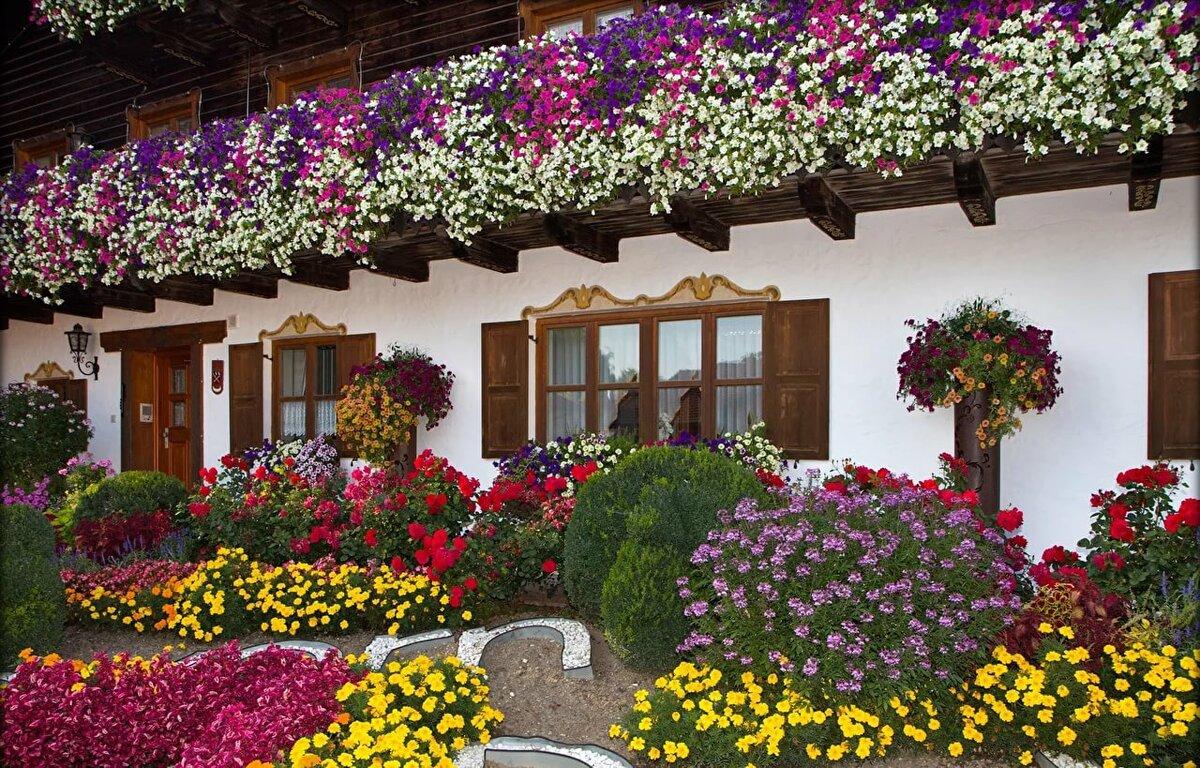 Цветы во двор картинки