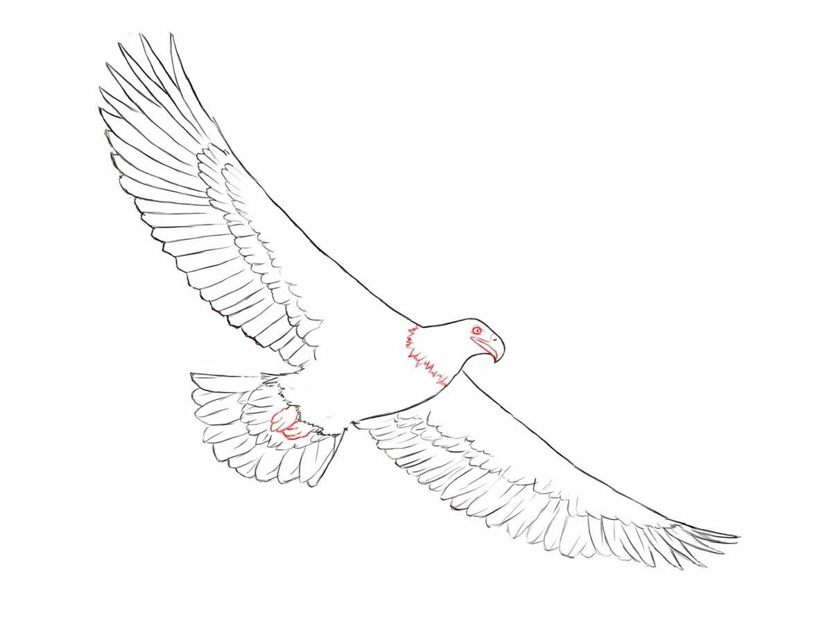 рисунок орла в полете остальной