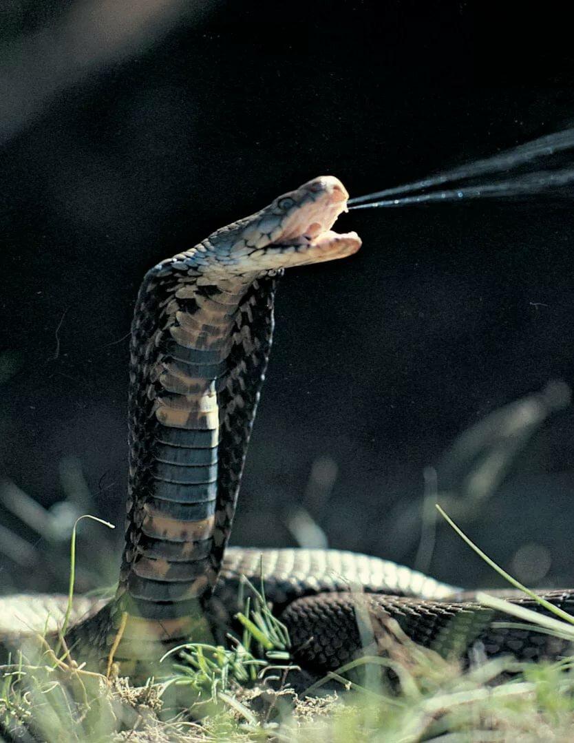 открытия бросок змеи картинки аквапарке мореон нет