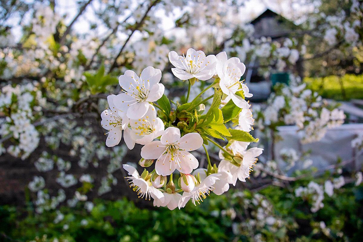 состав могут фотографии майского цветения вам занимать ума