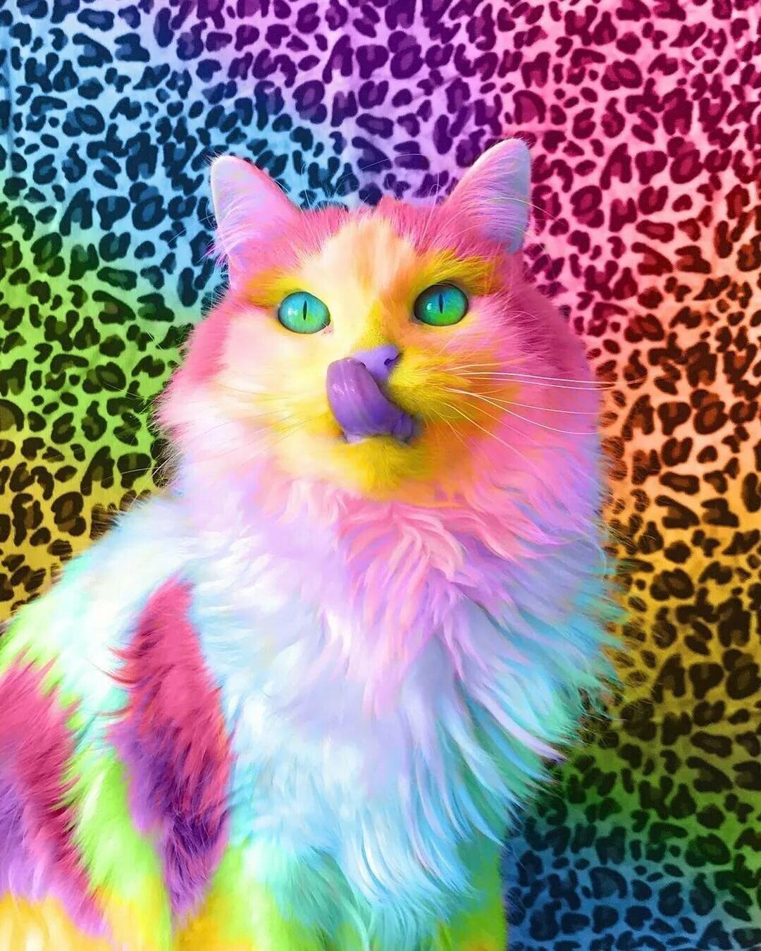 Разноцветные котята картинка