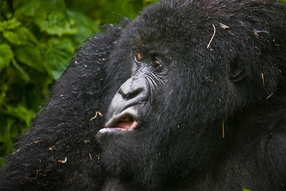 Смотреть интересные картинки про животных
