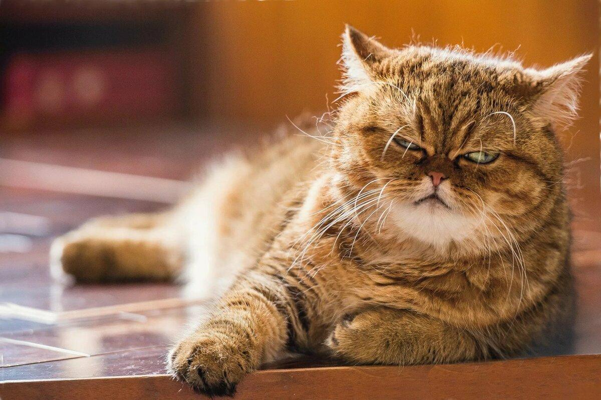 Любви букетов, смешной котик