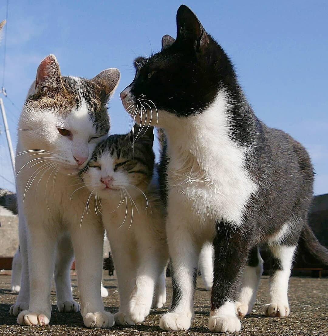 Картинки с семейными котиками