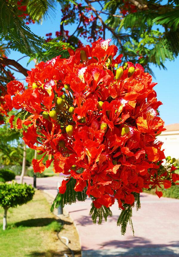 цветы египта названия и фото наиболее широко