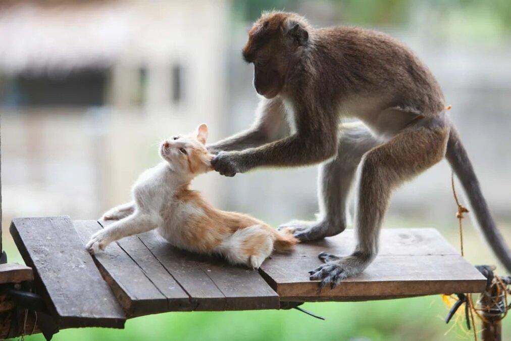 Прикол животные видео, открытках