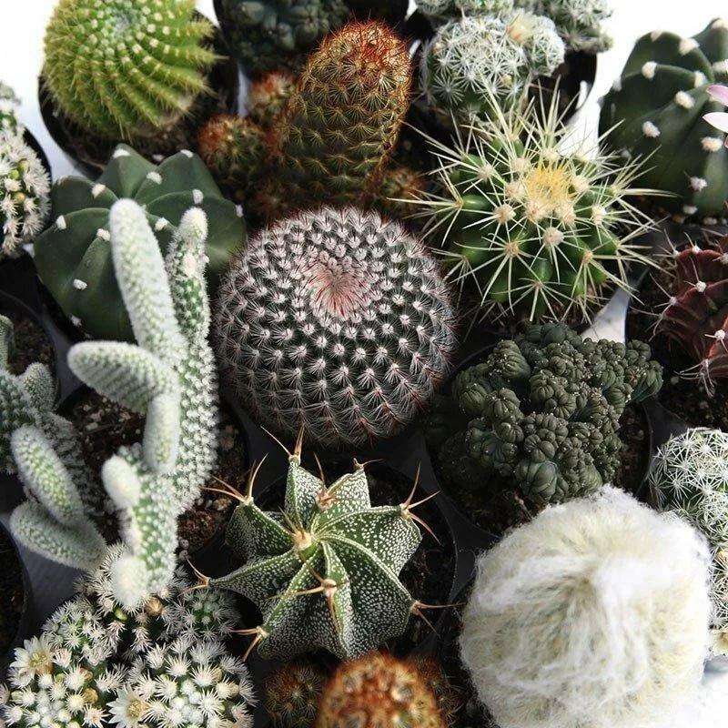 картинки кактусов и их названия фото момент заселения