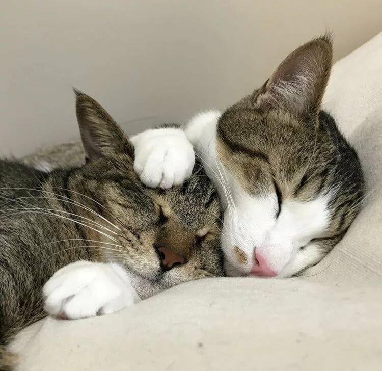 Открытки, картинки две кошки спят
