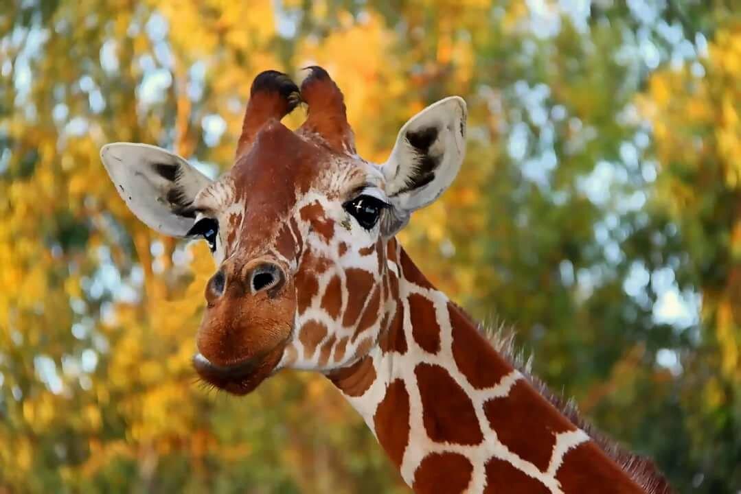 красивые жирафики картинки изучили самые