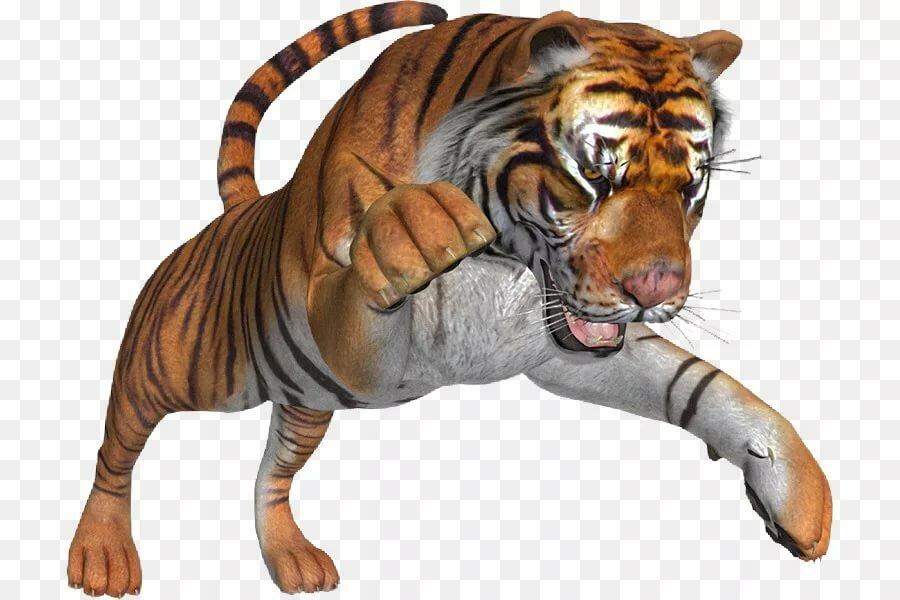 картинка тигр без фона оформленная борода делает