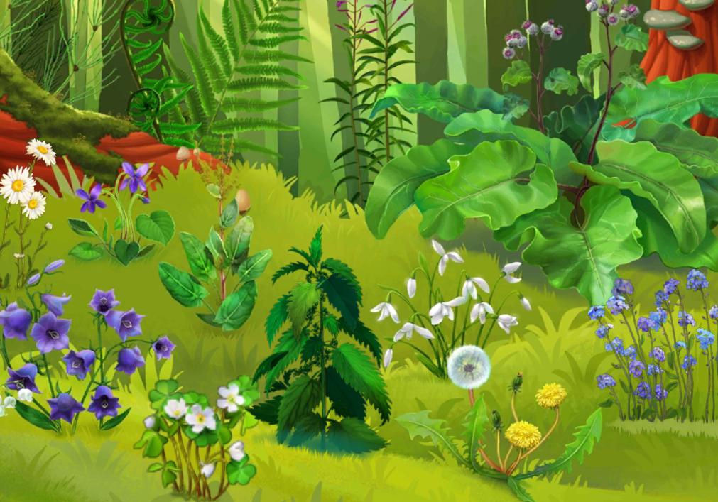 Лесные полянки картинки для детей