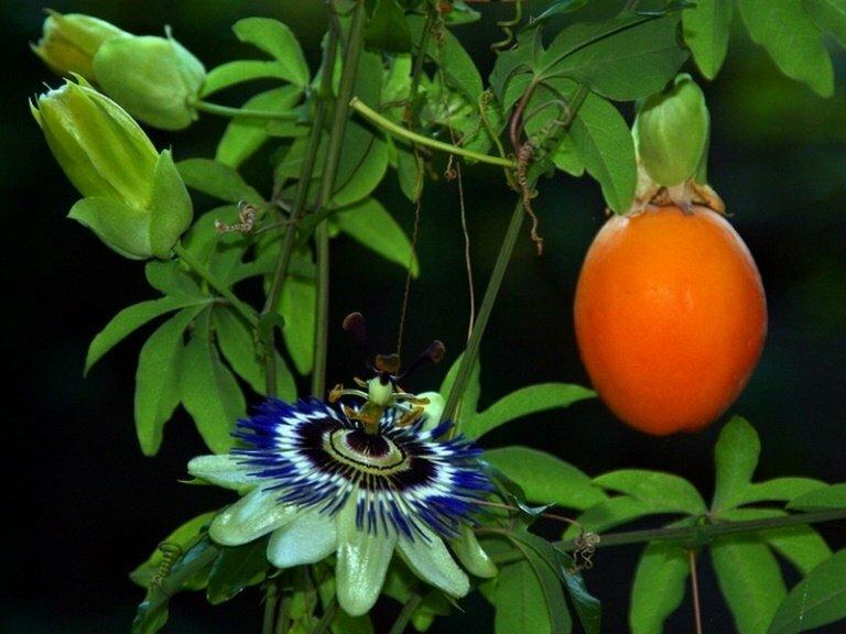 Экзотические растения для дома купить спб