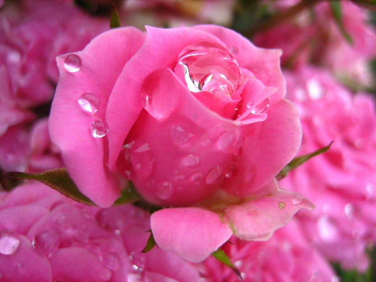 Фото цветов гифки