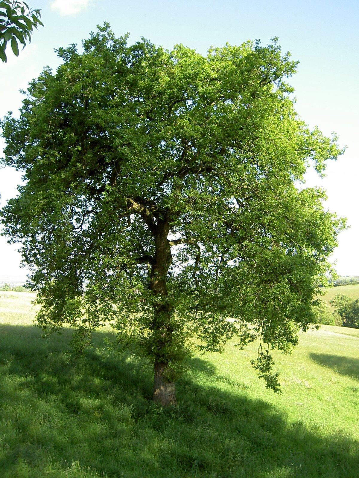 как показывает картинки деревья фото и названия один