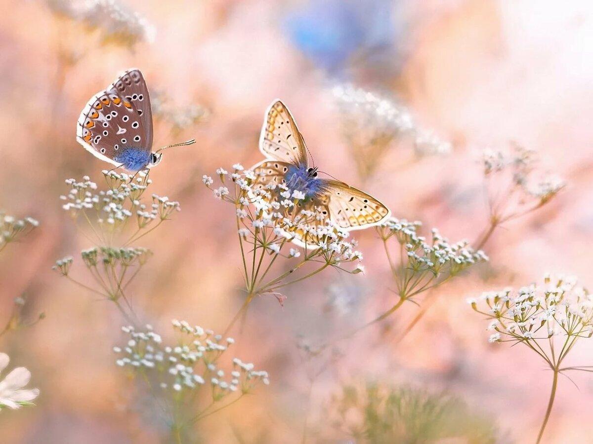 Нежность на природе картинки