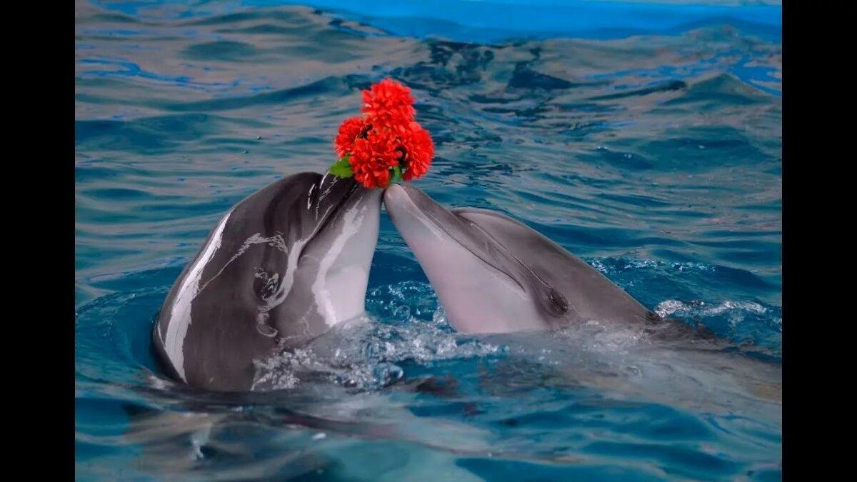 День дельфинов открытка