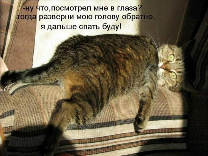 Абдулатипова, очень смешные картинки про кошек с надписями