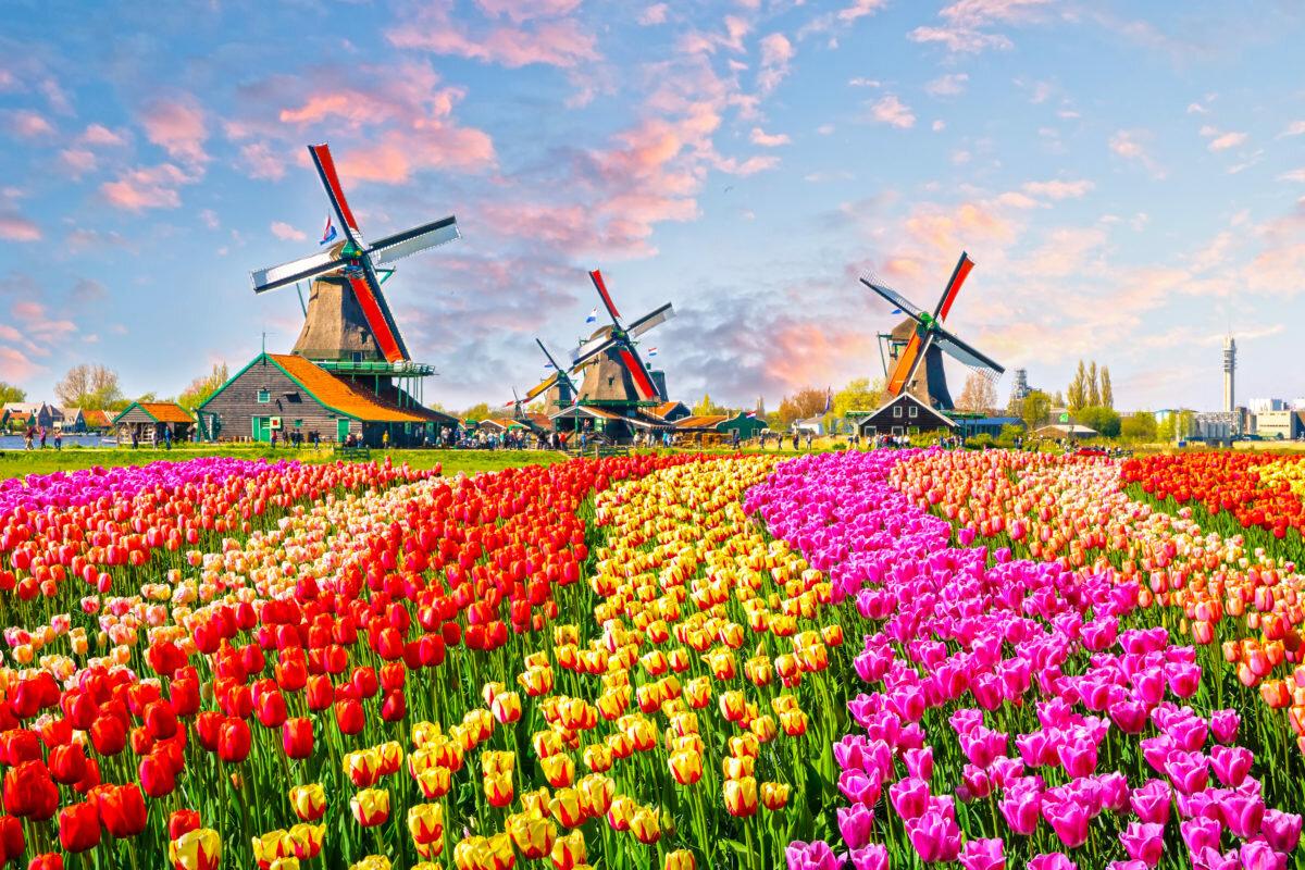 картинки цветов развивающихся стран способ