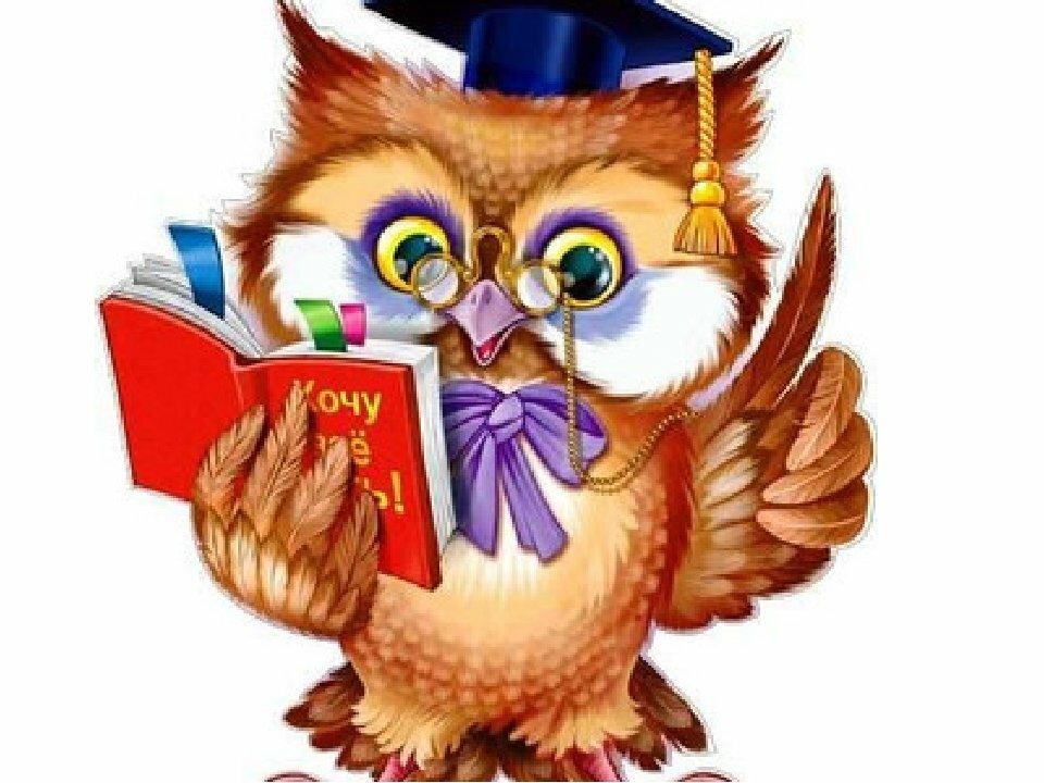 Картинка умная сова на прозрачном фоне