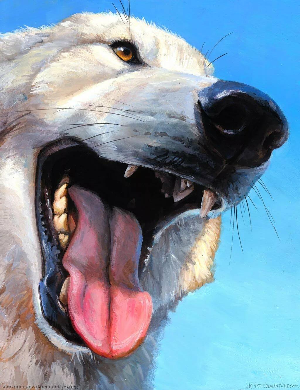 арт картинки волк веселые что если